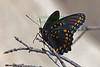 Butterfly1133