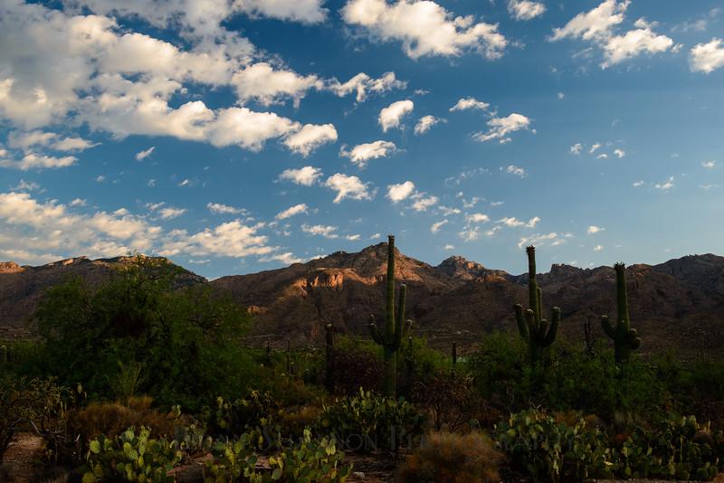Saguaro canyon vista