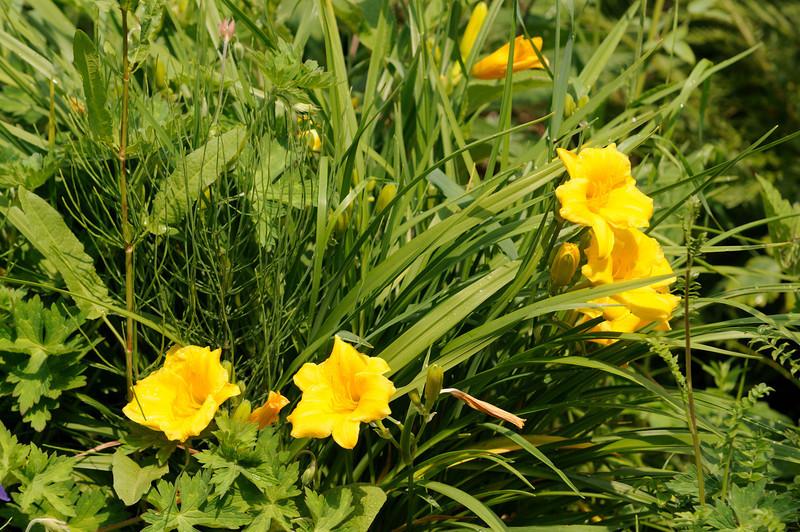 Lindeijer_2011-06-05_142743