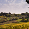 Firenze vineyards