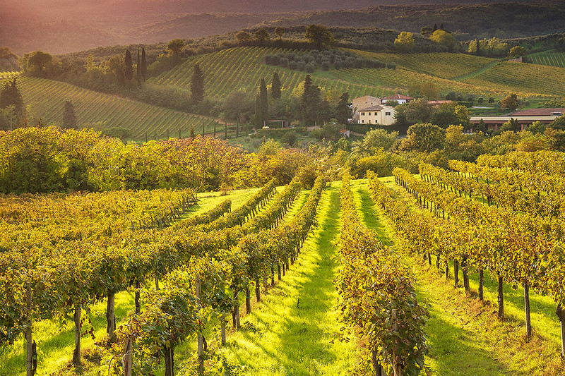 Golden sunset at San Gimignano vineyard.