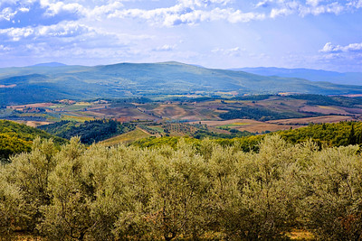 Olive Groves of Fonterutoli