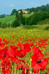 Tuscany #10