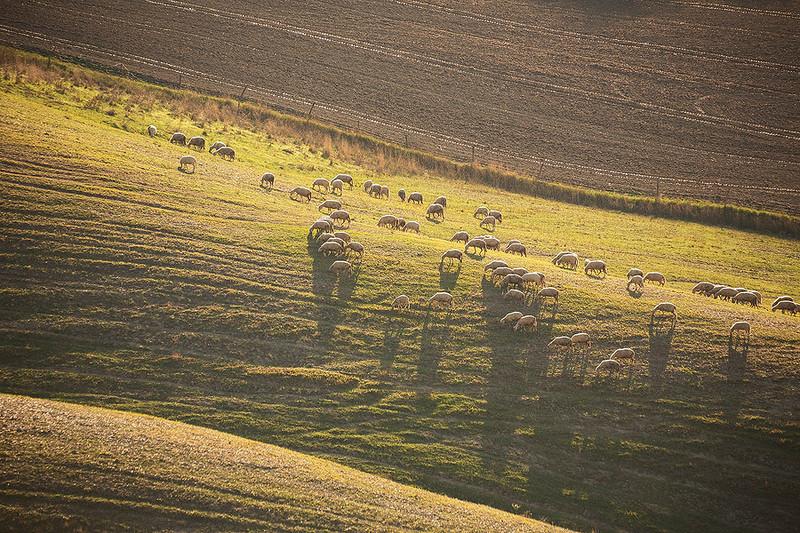 A farm near Torre A Castello, Siena, Italy.