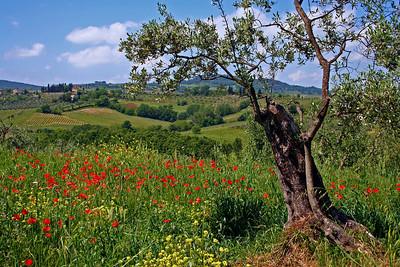 Tuscany #12