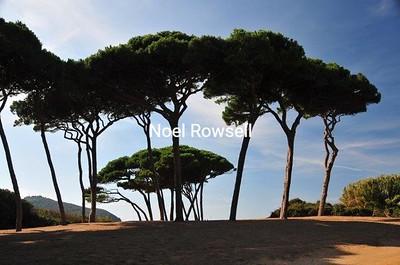 Italy #4 130