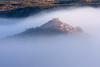 Foggy Morning and Javelinas in Clarkdale, AZ 2/16/08