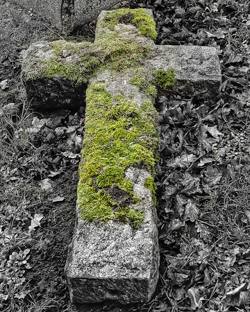 Moss on a Cross