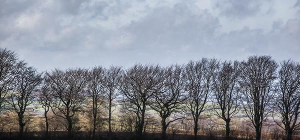 Dartmoor Treeline