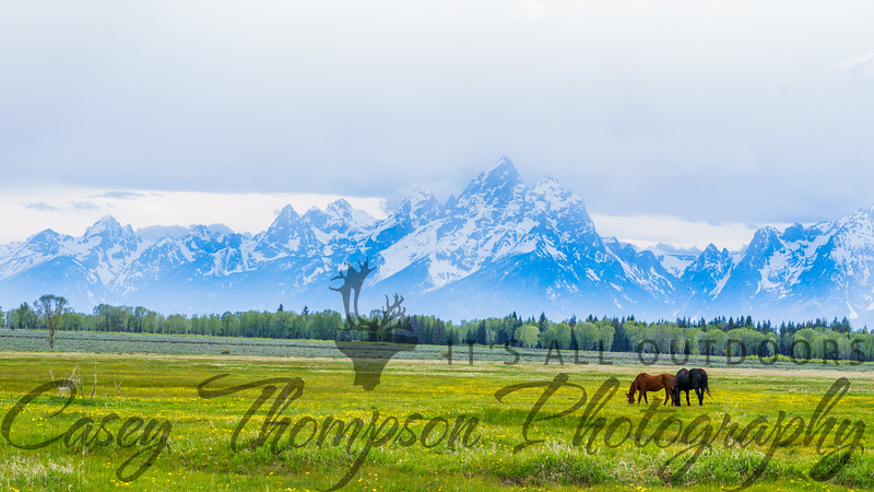 Horsing Around the Tetons