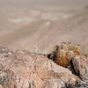 Cactus at Dantes View - Death Valley - California