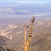 Telescope Peak Trail - Death Valley - California<br /> Looking north-west over Panamint Valley to the High Sierra