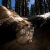 Sequoia NP - Fallen Sequoia in Giant Forest