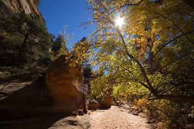 Autumn colors and dry riverbed Near the east entrance, on the Zion - Mount Carmel Highway (HW 9)