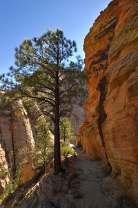 On the Observation Point Trail