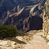 On the Observation Point Trail<br /> Angels Landing in the background