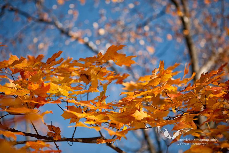 October 2011. Near Hawk, West Virginia. Autumn colors.