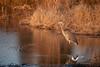 January 1st, 2012. Blackwater National Wildlife Refuge. Marshland.