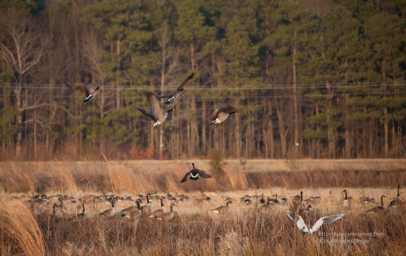 January 1st, 2012. Blackwater National Wildlife Refuge. Marshland.