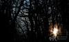 November 2011. Evening light on Skyland Drive, Shenandoah National Park.