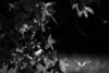 October 2011. American Chestnut Land Trust.