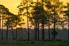 Warm summer sunrise at Babcock-Webb WMA in Fort Myers, Florida, August 2017. [Babcock-Webb WMA 2017-08 001 FortMyers-FL-USA]