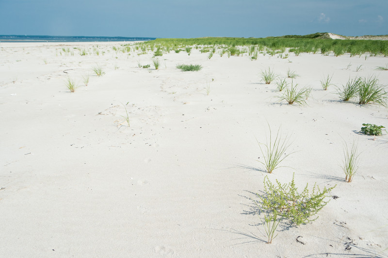 Out on the beach--Piping Plover nesting habitat--at Crane Beach (Essex) near Boston, Massachusetts, July 2015. [Boston 2015-07 017 MA-USA]