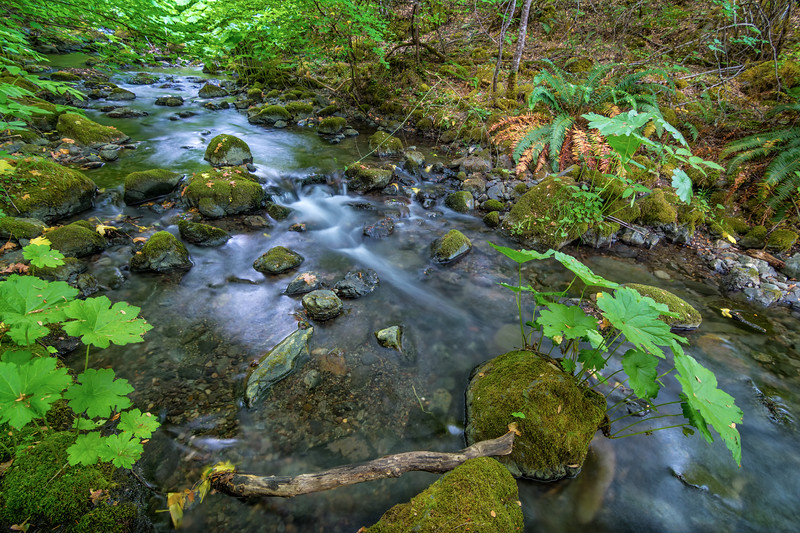Small rocky creek in oak and fir woodland forest at Redbud, California, June 2014.[Redbud 2014-06 HDR-01-1 Trinity-CA-USA_TC&NR]