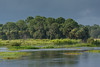 An approaching thunderstorm darkens the skies over an already flooded Harns Marsh, Fort Myers, Florida, August 2017. [Harns Marsh 2017-08 001 FortMyers-FL-USA]