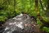 The forest river just below Bridal Veil Falls, Columbia River Gorge, Oregon. July 2012. [Bridal Veil Falls 2012-07 013 OR-USA_TC]