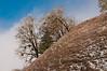 Snow-sprinkled trees near Leggit, California, November 2010