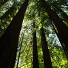 Little Redwood NP, not the real one