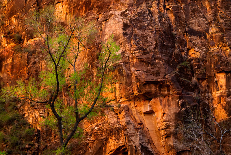 Contrast in the Temple of Sinawava - Zion National Park