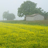 Inspired By Monet - Yellow rape field, Norcia, valnerina, Umbria, Italy.