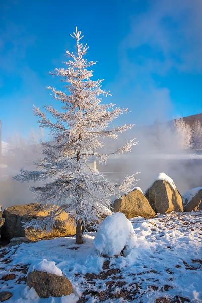 The Perfect Xmas Tree -Chena Hot Springs Resort, Fairbanks, Alaska