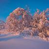 Pink Hoarfrost -Fairbanks, Mt Aurora Skiland, Alaska