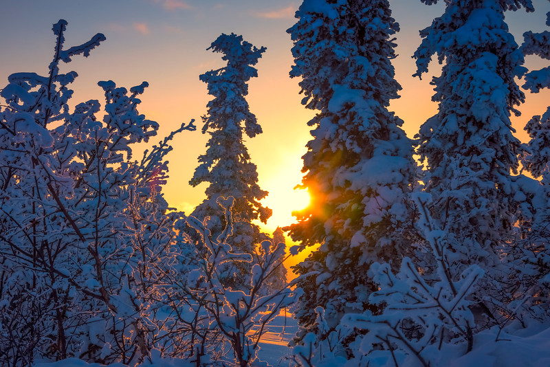 Sun Peaking Through Snow -Ester Dome, Fairbanks, Alaska