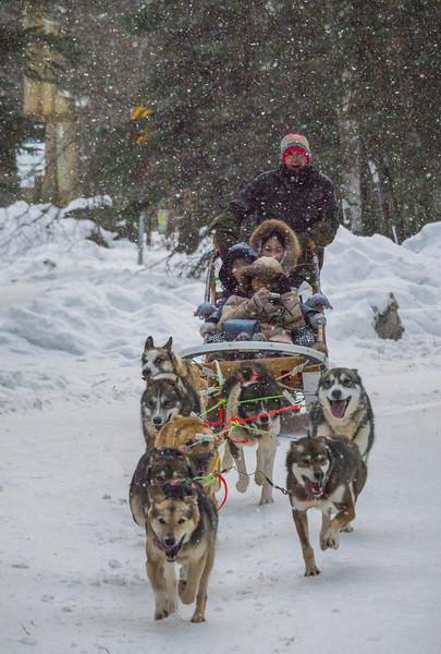 Dog Mushing And Snow Falling -Chena Hot Springs Resort, Outside Fairbanks, Alaska