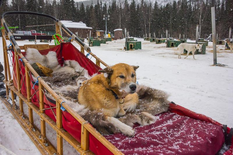 Taking A Break -Chena Hot Springs Resort, Outside Fairbanks, Alaska