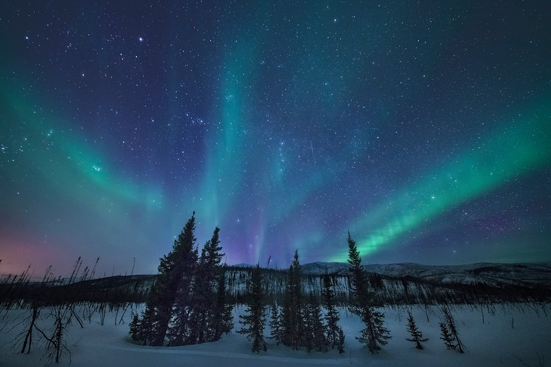 Christmas Tree Magic Under The Northern Lights