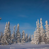Snow Capped Trees -Fairbanks, Mt Aurora Skiland, Alaska