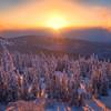 Sunset Glow Over The Forest Floor -Ester Dome, Fairbanks, Alaska