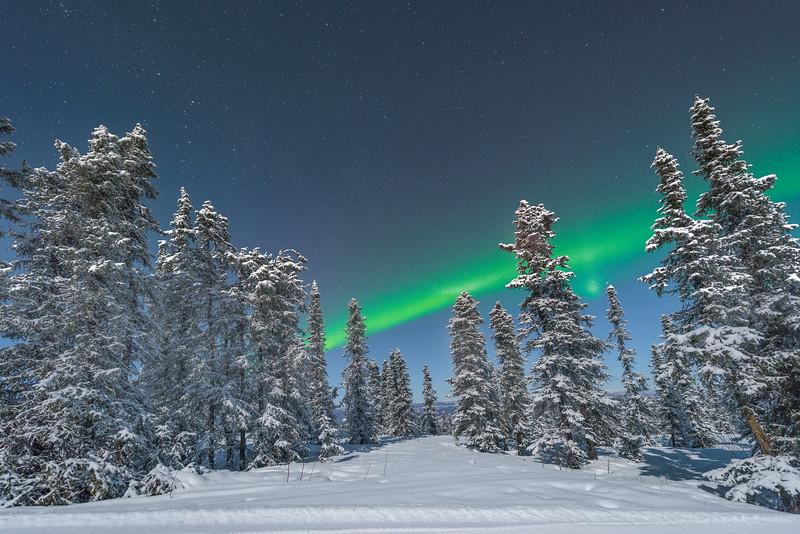 Northern Lights Framed In Between Trees -Mt Aurora Skiland, Fairbanks, Alaska