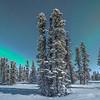 Standing Tall Behind The Lights -Mt Aurora Skiland, Fairbanks, Alaska