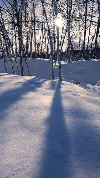 Shadows Of Trees Across The Snow Landscape - Goldstream Valley, Fairbanks, Alaska