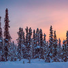 Sunset Glow Over Snow Capped Trees -Fairbanks, Mt Aurora Skiland, Alaska