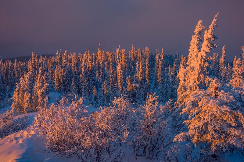 Blue And Gold -Ester Dome, Fairbanks, Alaska