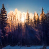 SunGlow Burst Through Trees -Chena Hot Springs Resort, Fairbanks, Alaska