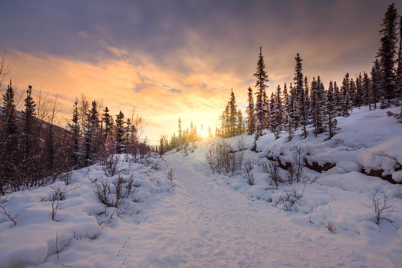 Sunrise Sunburst Up The Trail -Chena Hot Springs Resort, Outside Fairbanks, Alaska