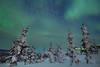 Snow Covered Trees Under The Green Magic - Mt Skiland, Fairbanks, Alaska